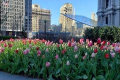 City-Hall-Spring